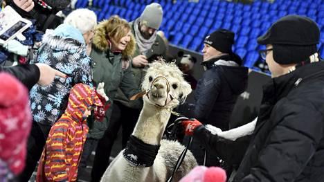 Alpakoita ihailtiin lastentapahtumassa Töölön jalkapallostadionilla itsenäisyyspäivänä 6. joulukuuta.