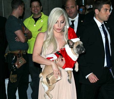 Joulukuussa 2015 Lady Gagan ranskanbulldoggi Koji oli sonnustautunut tonttupukuun.