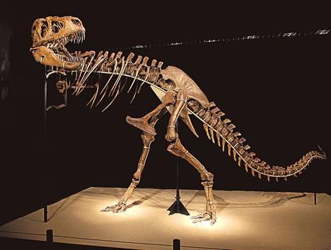 Tarbosauruksen luuranko oli esillä Cosmocaixa-museossa Alcobendasissa Espanjassa vuonna 2010.
