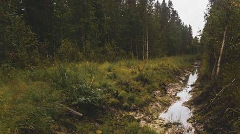 Metsätalous kuormittaa vesistöjä paljon enemmän kuin tähän asti on luultu. Ravinnekuormitusta aiheuttavat etenkin metsäojitukset. Kuvassa metsäoja Vaalassa elokuussa 2019.