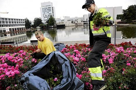 Puistotyöntekijät Niko Hyvärinen ja Elli Perko hoitivat torstaina ruusuistutuksia Tapiolan keskuksessa Espoo-päivää varten.