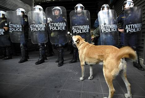 Kulkukoira haukkui poliiseja mielenosoituksen aikana Ateenassa perjantaina.