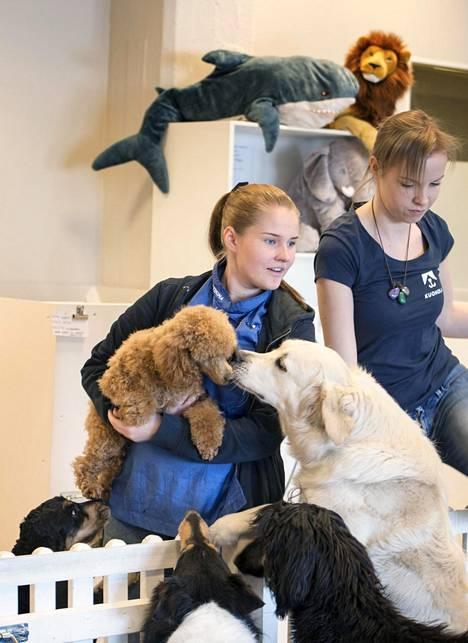 Kultainennoutaja Nekku, afgaaninvinttikoira Winnie, cockerspanieli Fanny ja collie Ronja kiirehtivät tervehtimään, kun Hemi lähtee eläintenhoitaja Nea Kokon trimmattavaksi. Eläintenhoitaja Grete Olesk ohjaa koirien leikkejä.