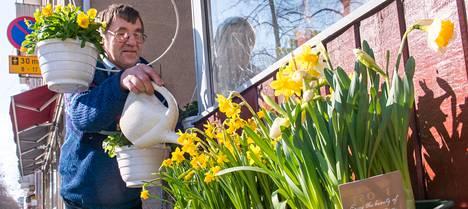 Munkkiniemen kukkakioskia pitävä Henrik Fallström kasteli ruukkunarsisseja pitkänäperjantaina.