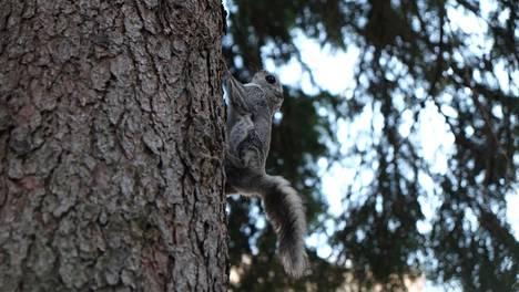 Liito-oravat ovat toukokuussa viihtyneet Keilaniemessä olevan kerrostaloyhtiön pihamaalla.
