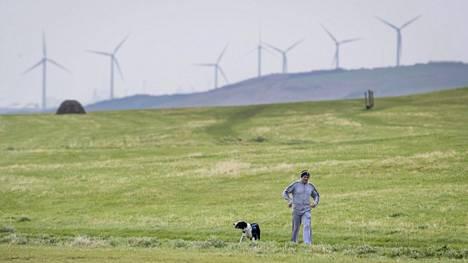 Koira isäntineen kävelyllä lähellä Whitehavenia Luoteis-Englannin rannikolla. Alueelle oli määrä avata uusi hiilikaivos.
