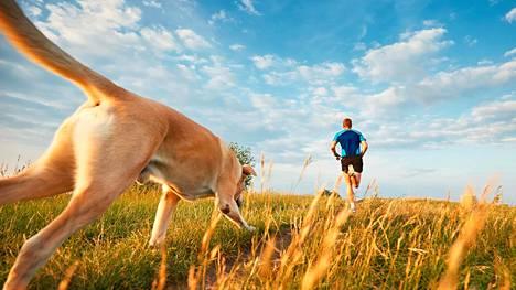Harva nisäkäs kykenee samaan kuin ihminen ja susi. Yhteinen juoksuharrastus saattoi olla syy siihen, että koirasta tuli ihmisen paras ystävä.