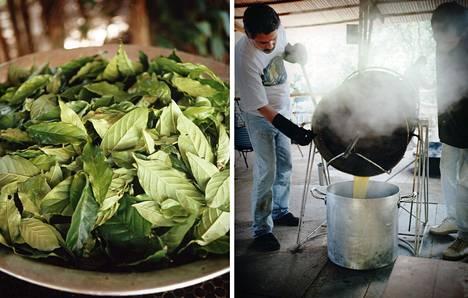 Psykedeeliä sisältävää kasviuutetta on käytetty Amazonin alueella. Ayahuascaa tehdään kahdesta kasvista. Juoman käyttö on Brasiliassa laillista uskonnollisissa menoissa. Nyt länsimainen lääketiede on kiinnostunut psykedeelien käytöstä masennuksen hoidossa.