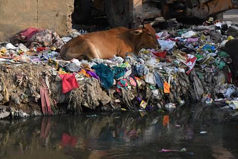 Lehmä makasi roskien keskellä Taimur Nagarin slummissa Intian Delhissä 1. kesäkuuta. Intia aikoo luopua kertakäyttömuovista vuoteen 2022 mennessä.