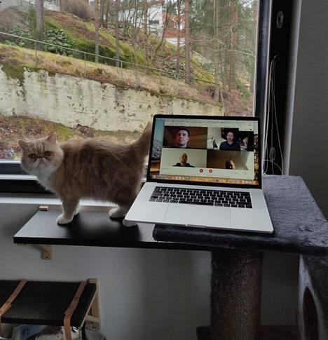 Tuike Järven kissa Herkku halusi osallistua videopalaveriin.