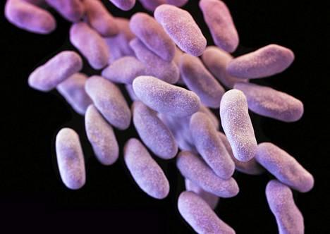 Mikroskooppikuva antibiooteille vastuskykyisestä enterobakteerista.