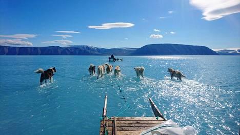 Tanskalainen tutkimusryhmä haki laitteistoaan paikallisen koiravaljakon avulla merijäältä Grönlannissa. Sulamisvedet olivat yllättäen tulvineet 1,2-metrisen jääkerroksen päälle, mikä hankaloitti liikkumista.