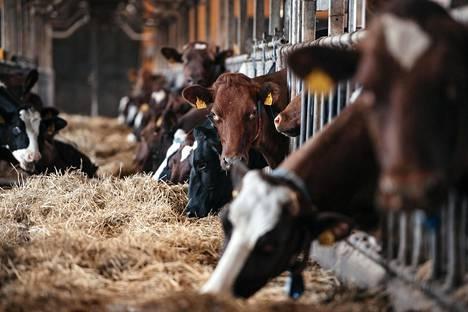 Arla Suomi on tehnyt sille maitoa tuottaville tiloille ilmastokartoitukset, joiden tavoitteena oli selvittää tilojen kasvihuonekaasupäästöjen suuruus.