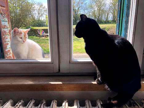 Kaksi kissaa katselivat toisiaan ikkunan läpi Ranskassa keskiviikkona.