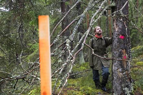 """Espoon ympäristöyhdistyksen aktiivi Marko Takanen kantaa huolta Harmaakallion tulevan luonnonsuojelualueen kohtalosta. """"Vanhat lahopuut pitäisi jättää vähintään maalahopuiksi. Niitä ei saa viedä pois, vaikka ne kaadettaisiin"""", Takanen sanoo."""
