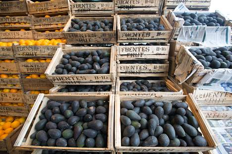 Avokadoja myynnissä Chilen Santiagossa tammikuussa 2013. Chile on maailman neljänneksi suurin avokadontuottaja