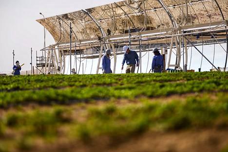 Saharan metsähankkeen koekasvihuone toimii Qatarissa. Se hyödyntää  merivettä ja käyttää suuria peilejä energian tuottamiseen.