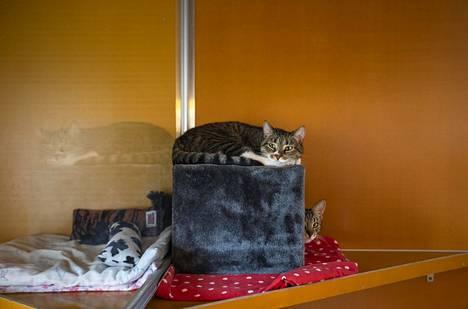 Löytökissoja Hesyn löytöeläintalossa Itä-Pakilassa viime elokuussa.