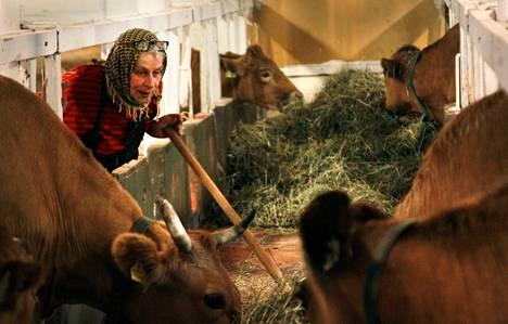 """Johanna Penttinen on myynyt alkuperäiskarjan raakamaitoa parikymmentä vuotta ilman ongelmia. """"Vakiasiakkaat ovat vihaisia, kun joutuvat menemään muualle. Mutta minä en saa enää myydä."""""""
