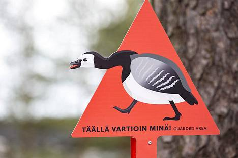 Valkoposkihanhien pesistä varoittavat Korkeasaaressa kyltit.