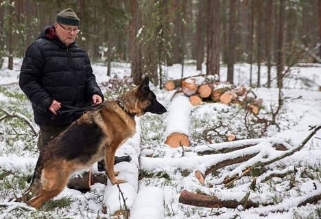 Vuosaarelainen Reijo Lindström ihmetteli sunnuntaina hakattuja keloja Vuosaaren Kallahdenniemellä Parze-koiransa kanssa.