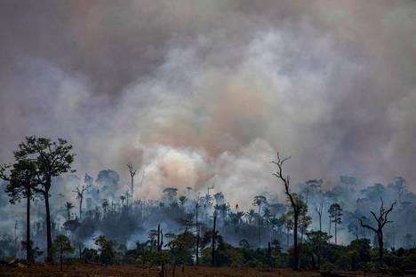 SADEMETSÄT TULESSA. Ympäristöjärjestöt olivat huolissaan Amazonasin alueen lisääntyneistä metsäpaloista. Metsiä on poltettu aiempaa enemmän viljelysmaaksi. Kuvassa savuavaa sademetsää Paran osavaltiossa Brasiliassa elokuussa 2019.