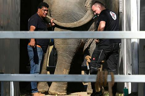 Eläinlääkärit Amir Khalil (vas.) ja Frank Göritz tekivät tutkimuksia Kaavan-norsulle Islamamadissa ennen sen lähtöä kohti Kambodžaa.