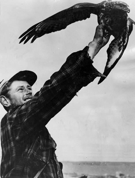 Linkola oli ensimmäisiä, jotka rengastivat kalasääksiä.