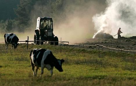 Vielä ennen vuotta 2003 monet Puolan maaseudun asukkaat pitivät sikoja tai lehmiä pihallaan, mutta EU:hun liittymisen myötä siitä tuli kannattamatonta. Kuva on Rostkista itäisestä Puolasta.