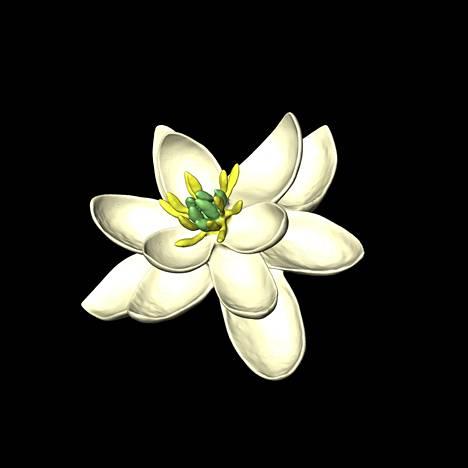 Kansainvälinen tutkijaryhmä päätyi siihen, että maailman ensimmäinen kukka oli tällainen. Kuva on tehty tietokoneella.