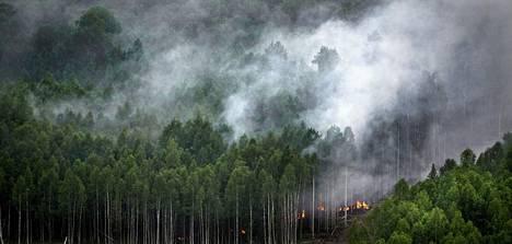 Ympäristöjärjestöt ovat yhdistäneet Siperiassa yleistyneet metsäpalot ilmastonmuutokseen. Venäjän virallinen selitys on ollut se, että paloja on sytytetty tahallaan, jotta laittomat hakkuut jäisivät huomiotta.