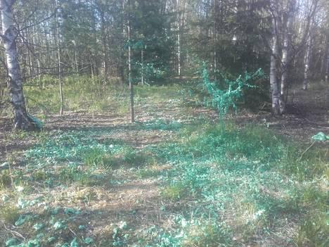 Kuva näyttää, miten PU-vaahtoa on pursotettu puihin ja kasveihin.