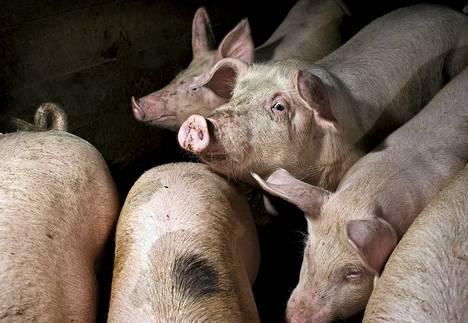 Ismo Eerolalla on sikala, jossa osalla eläimistä on  paremmat oltavat kuin lain minimivaatimukset määräävät.