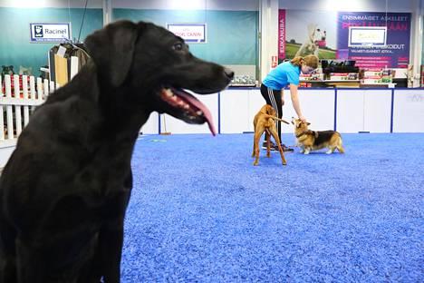 Koirien elämyskeskus ShowHau Center Vantaan Tammistossa. Tet-harjoittelija Ella Nieminen silittää Tellua. Etualalla Tinka-koira.