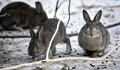Valmisteilla olevassa koe-eläinlaissa ehdotetaan villiintyneiden kotieläinlajien kuten koirien, kissojen ja kanien mahdollisuutta käyttää koe-eläiminä. Toimenpide vaatisi aina riippumattoman eläinkoelautakunnan luvan.