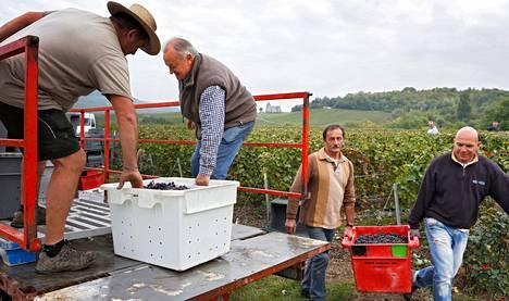 """Raynal Vonillet (vas.) ja viinitilan omistaja Christophe Pernet lastasivat rypäleitä auton lavalla Champagnen maakunnassa. Pernet'llä ei ole kiire eläkkeelle. """"Toimiminen on elämää"""", hän sanoo."""