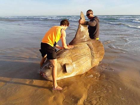 National Parks South Australian Facebook-sivulla julkaistu kuva möhkäkalasta.