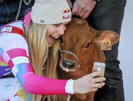 Lindsey Vonn otti selfien poseeratessaan palkinnoksi saamansa vasikan kanssa.