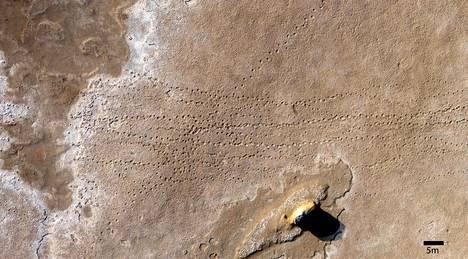 Yhdistyneistä arabiemiirikunnista löytynyt fossiilijalanjälki on yli kaksisataa metriä pitkä.