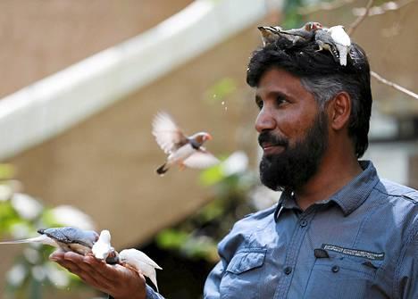 Linnut hyörivät Abdulrahman al-Sebain ympärillä Saudi-Arabiassa keskiviikkona. Hänellä on yli 500 lemmikkilintua.