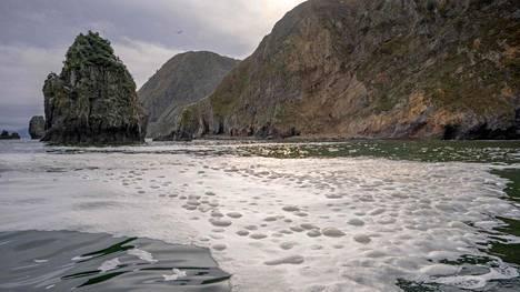 Ympäristöjärjestö Greenpeacen kuvaa Halaktyrskin uimarannalta, jossa vesi haisee kemikaaleilta.