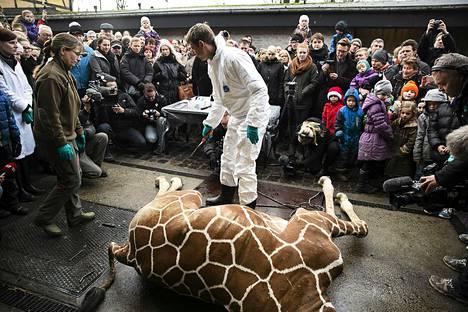 Eläinlääkärit paloittelivat lopetetun Marius-kirahvin Kööpenhaminan eläintarhassa viime sunnuntaina.