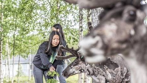 Kiinalaisten turistien määrä on kasvanut kohisten Lapissa. Anita Song ja Sarah Feng tutustuivat Santa's Pet Farm -kotieläinpihan eläimiin Sirkan kylässä Levitunturin juurella heinäkuussa.
