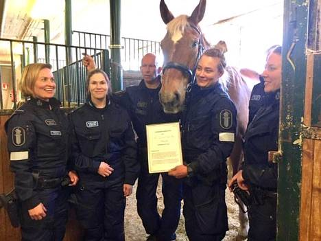 Portselaw-poliisihevonen eli tuttavallisemmin Poke Helsingin poliisilaitoksen keskiviikkona julkaisemassa juhlakuvassa.