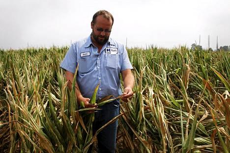 Kuivuus tekee tuhoja maissisadolle Yhdysvaltojen keskilännessä. Merrill Kelseyn maatilan työntekijä Scott Beyer tarkasteli satoa torstaina.
