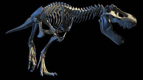 Tietokonemallinnus Tyrannosaurus rexin luurangosta.
