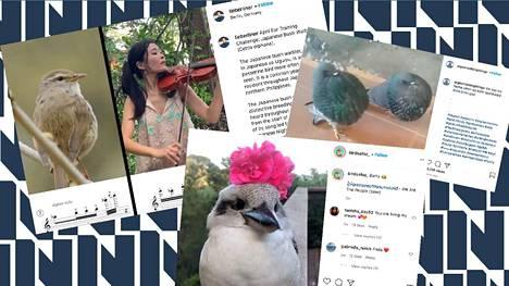 Lieberliner, Pigeonsdoingthings ja Birdsofoz ovat luovat Instagramiin suosittua lintusisältöä.