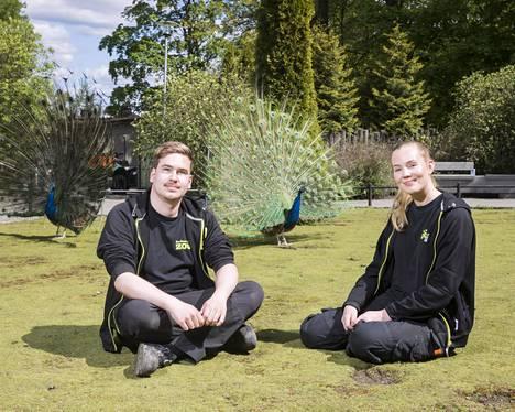 Korkeasaaren eläintenhoitajan Erik Cruzin ja Pia Paavolan takana poseeraa pyrstönsä levittänyt riikinkukko.