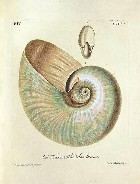 Nautilus on mustekalojen sukuinen nilviäinen, joita tunnetaan enää muutamia lajeja. Nautiluksen kuori Georg Wolfgang Knorrin kotilokirjasta 1757.