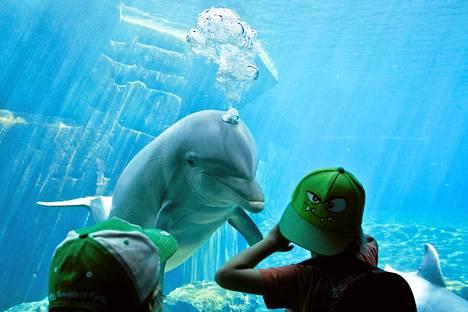 Delfiini katseli lapsia Nürnbergin delfinaariossa.